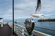 Fisherman's Wharf, Monterey, Californie, USA.