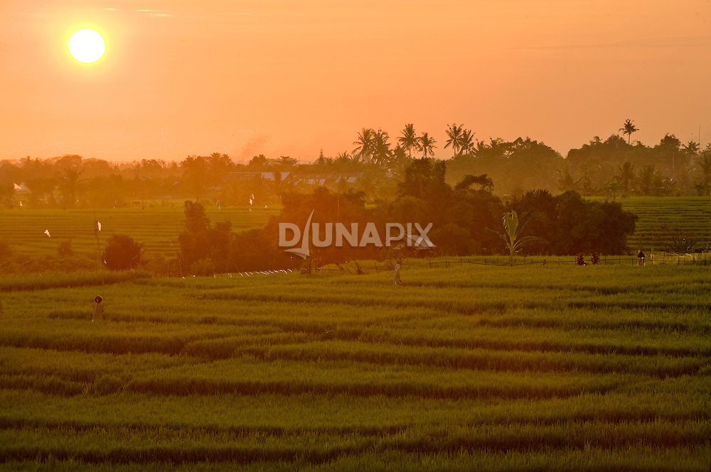 Sunset over rice fields, Canggu, Bali