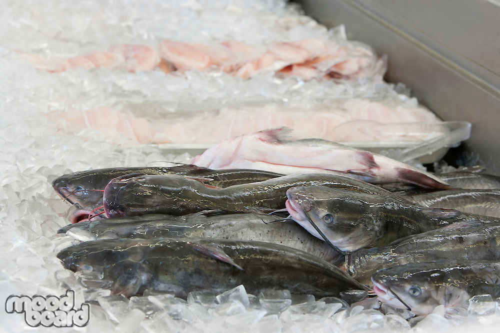 Close-up of cat fish on ice in fish market
