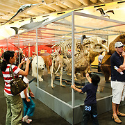 Animals on display in the Queensland Museum