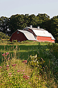 barn with ventilators, Joe-Pye Weed