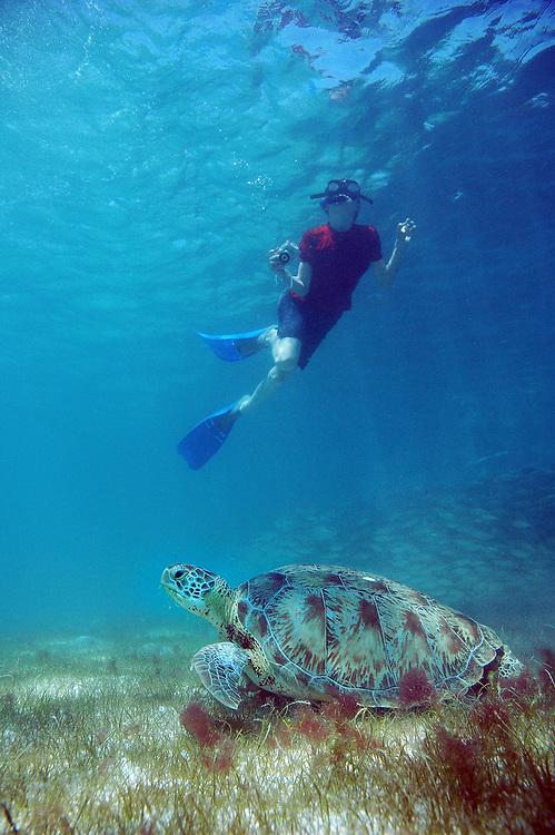 Boy and Green Sea Turtle (Chelonia mydas). Location : Akumal, Mexico