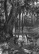 Florida Everglades, USA. Wood engraving c1885