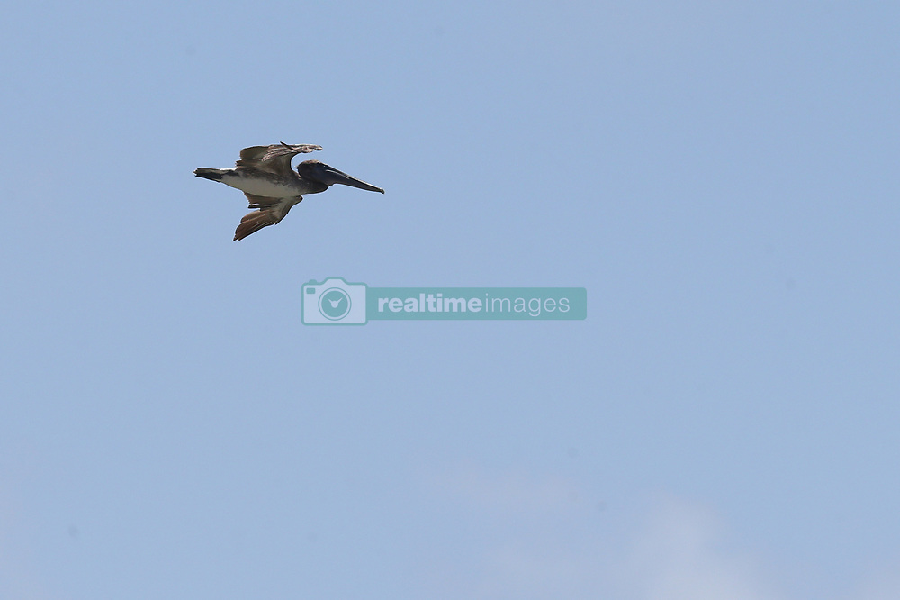 May 4, 2019 - Fort Lauderdale, Florida, United States Of America - FORT LAUDERDALE, FL - MAY 04: Pelican performs in the Fort Lauderdale Air Show on May 4, 2019 in Fort Lauderdale, Florida...People:  Pelican. (Credit Image: © SMG via ZUMA Wire)
