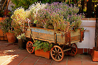 An old  wooden  wagon filled with  potted flowering  heather plants.