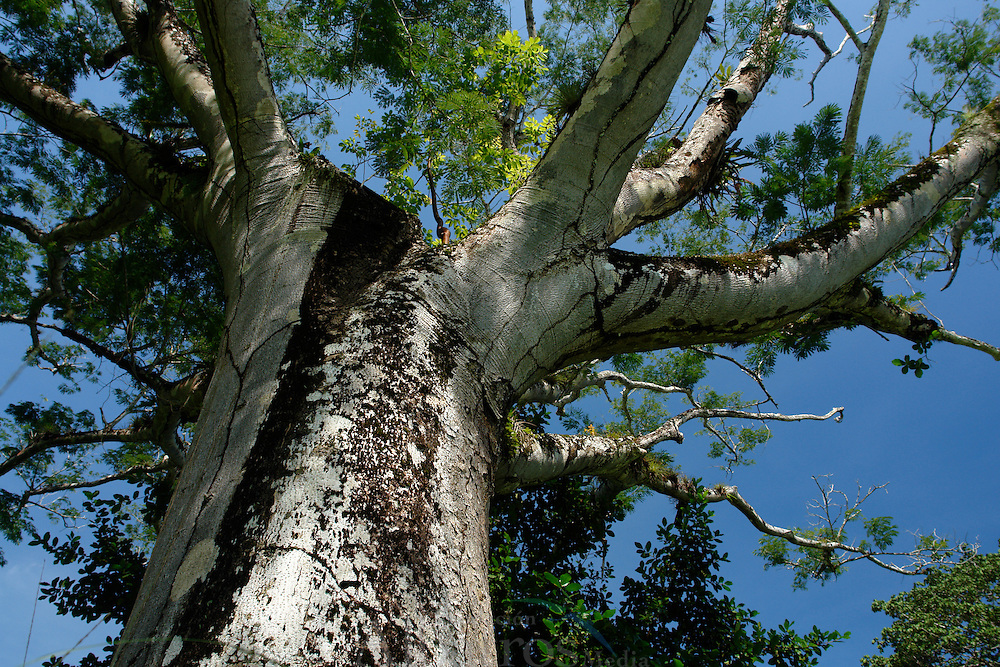 El Parque Municipal Summit es un jard&iacute;n bot&aacute;nico y un zool&oacute;gico de 250 hect&aacute;reas de extensi&oacute;n total (de las cuales 55 corresponden al jard&iacute;n bot&aacute;nico), que se encuentra en las afueras de la ciudad de Panam&aacute;, en el municipio de Panam&aacute;, corregimiento de Anc&oacute;n.<br /> <br /> Se cre&oacute; en 1923 por parte de la antigua compa&ntilde;&iacute;a del Canal de Panam&aacute;, como la Granja experimental Summit, para probar la adaptaci&oacute;n de especies de plantas de diferentes partes del mundo al clima tropical de Panam&aacute;.<br /> <br /> En la d&eacute;cada de 1960 se establece dentro del Bot&aacute;nico un peque&ntilde;o zool&oacute;gico que se ha ampliado poco a poco, teniendo hoy en d&iacute;a alrededor de 300 animales.<br /> <br /> Uno de los atractivos del zool&oacute;gico es el &Aacute;guila harp&iacute;a, considerada el ave nacional de Panam&aacute;.<br /> <br /> <br /> &copy;Alejandro Balaguer/Fundaci&oacute;n Albatros Media.