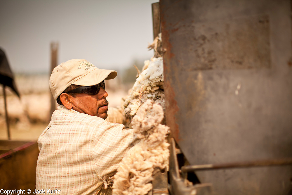 "05 JUNE 2011 - GREER, AZ: Felemon Perez (CQ) stuffs wool just shorn from sheep into a bundling machine at the Sheep Springs Sheep Co summer shearing camp northwest of Greer Sunday. Mark Pedersen (CQ), of Sheep Springs Sheep Co, said they drove about 2,000 sheep from Chandler up to their summer pastures near Greer. They were supposed to start shearing on Friday, but didn't start till Friday because of the Wallow Fire. They also run cattle on land southeast of the sheep pasture, closer to Greer. Pedersen said they were prepared to move both the cattle and the sheep if they had to. He said the biggest problem with the smoke was that it bothered the sheeps' lungs much the same way it bother people's lungs. The fire grew to more than 180,000 acres by Sunday with zero containment. A ""Type I"" incident command team has taken command of the fire.  PHOTO BY JACK KURTZ"