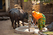 Indian woman villager pumping water from a well at Sawai Madhopur in Rajasthan, Northern India