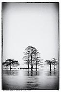 Lake Mattamuskeet NWR trees in dense winter fog