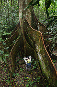 Buttress Roots of Ceiba Tree (Ceiba sp.)<br /> Yasuni National Park, Amazon Rainforest<br /> ECUADOR. South America