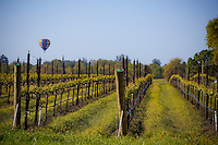 A hot air balloon over vineyards in Napa Valley, California.  Wine country!