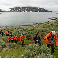 Guests depart Fortuna Bay from a rocky beach occupied by Antarctic fur seals. The Shackleton Hike leads from Fortuna Bay to Stromness on South Georgia Island.