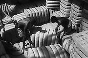 Loading Bales of Cotton, Victoria Nile, Uganda, Africa, 1937