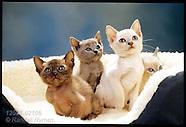 21: ST. LOUIS CATS, BRAZIL FIGURES, VIETNAM VET