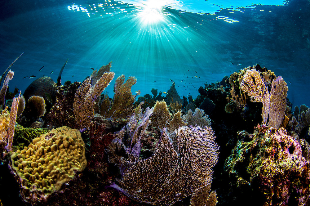 Seafans and other coral on a reef in The Bahamas. There are still patches of healthy reefs, but our decisions will determine their future.