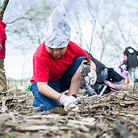 Joel Plata, 8, of Cicero plants a tree sapling.