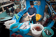 pescatore pulisce il pesce;<br />