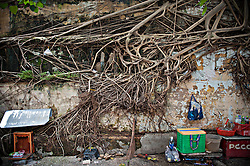 Roots of a tree overmaster an old wall in Ho Chi Minh city, Vietnam, Asia.