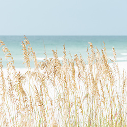 Sea oats beach grass photo in Pensacola Beach Florida. Pensacola Beach is a coastal city in the Emerald Coast area of the Southeastern United States. Photo is high resolution. Copyright ⓒ 2018 Paul Velgos with All Rights Reserved.