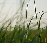 close up of native kansas grass