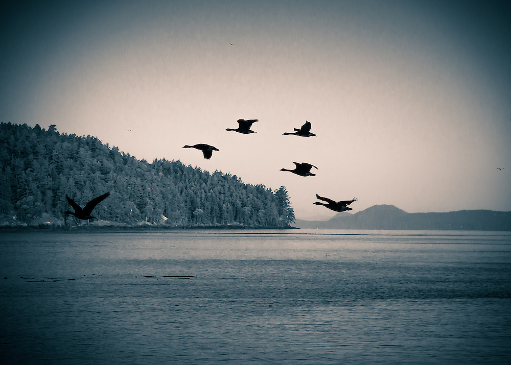 BIrds on Wind<br />