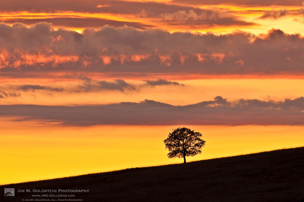 A California Oak silhouetted against an orange, red and pink colored sky at Sunset
