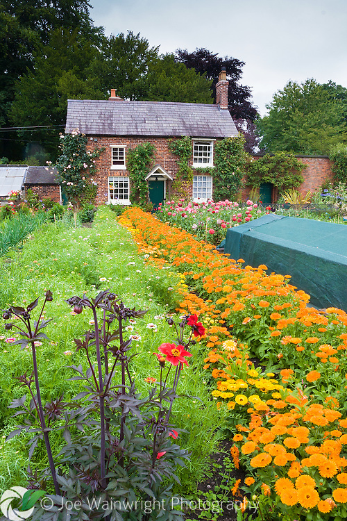 Marigolds bloom in profusion in Rode Hall's Kitchen Garden, in July.