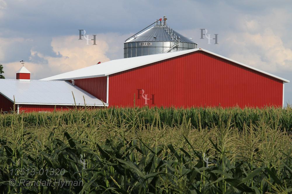 Young corn surrounds barn near Washington, Missouri.