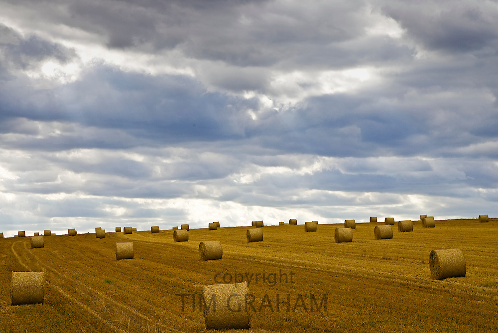 Straw bales in the landscape in the Cotswolds at Swinbrook in Oxfordshire, UK