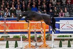 065, Mr Obolensky VG<br /> KWPN hengstenkeuring - 's Hertogenbosch 2020<br /> © Hippo Foto - Dirk Caremans<br /> 29/01/2020