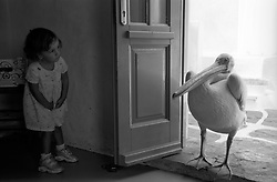 small girl hiding from a large pelican entering a doorway in Greece