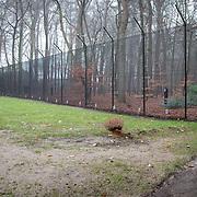 NLD/Lage Vuursche/20131213 - Graf van prins Friso in Lage Vuursche