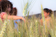 Children in a wheat field celebrating spring harvest. Photographed at Kibbutz Ashdot Yaacov, Israel