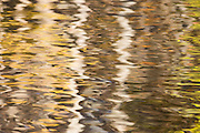 The Fall leaf colors were vibrant this day. Their abstract beauty caught my eye reflecting in the water on a windy day at Lums Pond State Park, Delaware