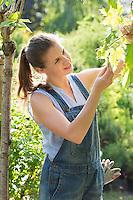 Female gardener examining leaves at garden