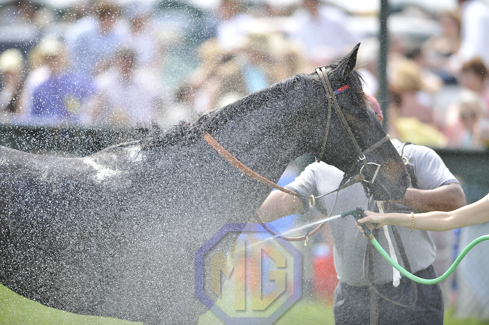 03 May 2008:  A horse is hosed down after competing in the 3rd race of the 83rd running of the Virginia Gold Cup Races on October 20, 2007 at the Great Meadow in The Plains, Va..