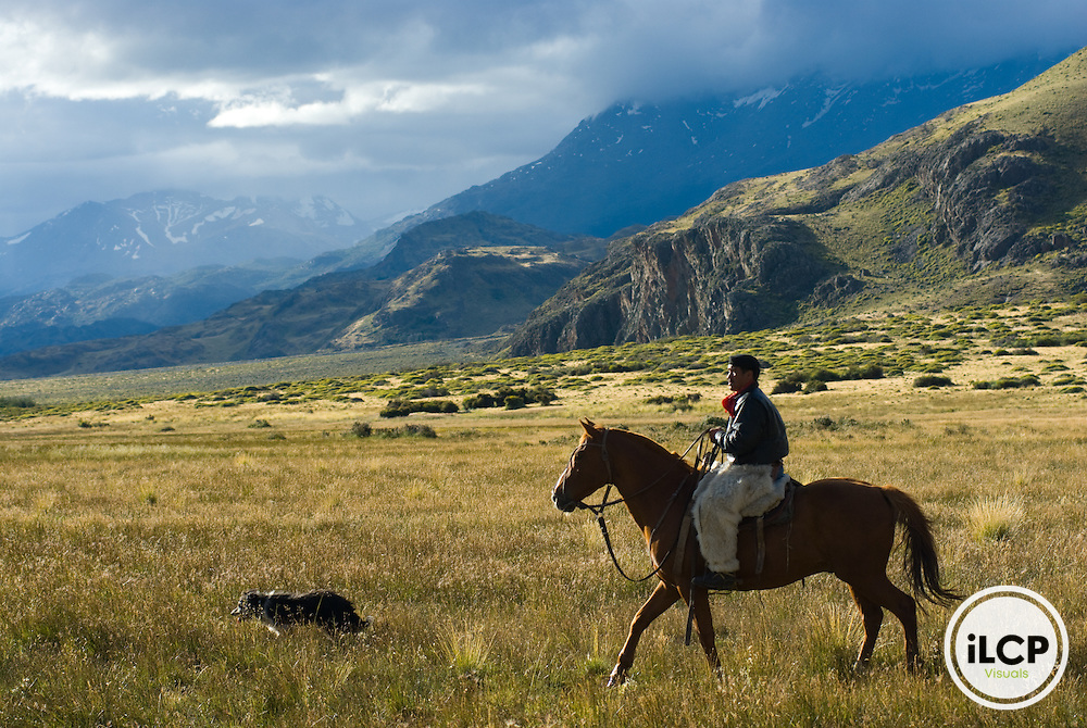 The last remaining Gaucho and his family herd the sheep and cattle that feed the staff at the Estancia Chacabuco. This estancia, previously one of the largest in Chilean Patagonia is now becoming the new Patagonia National Park. The process of creating the park involves removing fences and most of the animals from the property to allow these grasslands to heal. <br /> Gaucho: Erasmo Betancur Casanova (nickname: Beta) and his wife Eliana Casanova and their daughters Fanni (age 12) and Karen (age 14) herding animals on horseback, cooking in their camp kitchen, sheering sheep. Also scenes of Beta lassoing a cow and then bleeding it to death and then the entire family and staff butchering the cow.<br /> ILCP Patagonia RAVE story on the culture, community activism and scenics of the region of Chilean Patagonia that will be effected if 5 hydropower dams are created on the Baker and Pascua Rivers.
