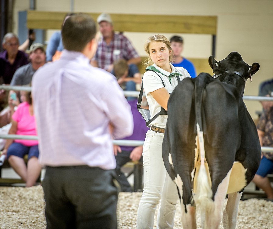 A girl stands with her cow while a judge examines the animal during a contest at the Maryland state fair.
