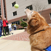 """""""Charlie"""" catches a ball thrown to him by North Mississippi Medical Center rehab patient Jack Balty Wednesday afternoon."""