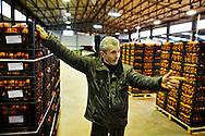 Rosarno, Italia - 19 dicembre 2010. Il proprietario della Medma Frutta, esportatrice di mandarini, clementine e arace in tutta Europa, all'interno di uno dei suoi capannoni a Rosarno..Ph. Roberto Salomone Ag. Controluce.ITALY - The owner of Medma Fruit company inside the tangerine stocking facility in Rosarno on December 19, 2010.
