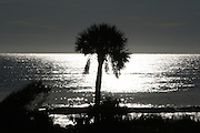 Palm Tree silhouette on a Jekyll Island beach. The sun was so bright it made this color picture black and white.