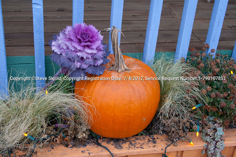 Autumn flower box with ornamental flowering cabbage and pumpkin. Cable Wisconsin WI USA