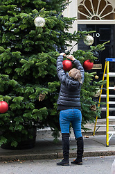 London, December 01 2017. Workers install the Christmas tree outside the door of 10 Downing Street, official residence of the British Prime Minister. The tree comes from the winner of the British Christmas Tree Growers' Association' annual competition for the honour of having a grower's tree at the prestigious address. © Paul Davey
