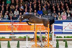 133, Mister Sonderbygaard<br /> KWPN hengstenkeuring - 's Hertogenbosch 2020<br /> © Hippo Foto - Dirk Caremans<br />  30/01/2020