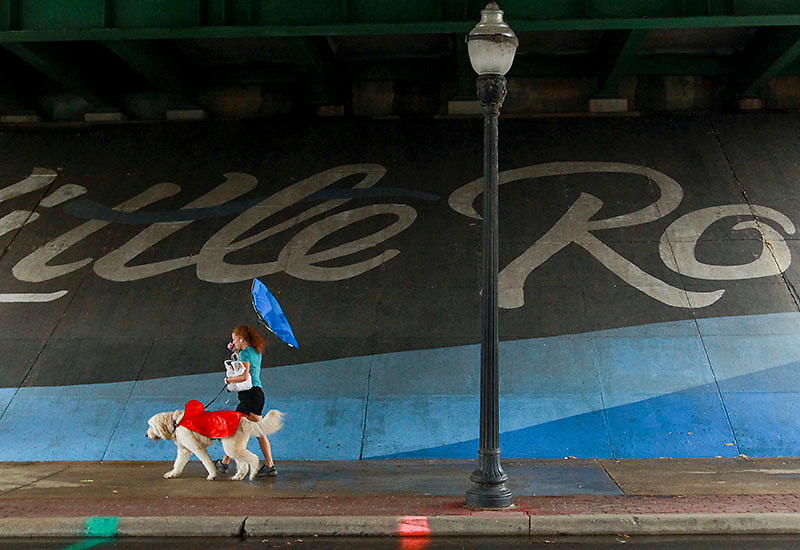 Arkansas Democrat-Gazette/BENJAMIN KRAIN --10/23/2015--<br /> Arnie Peacock, a large Golden Doodle, wears a rain coat as he is taken for a walk in the rain by his handler Julie Byrom on River Market Ave. in Little Rock Friday afternoon.