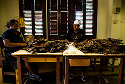 "Workers make Cohiba cigar at the ""El Laguito"" factory in Havana, capital of Cuba, on March 3, 2016. Cohiba is the flagship brand of Cuban cigar. It was first created in 1966 for Cuban revolutionary leader Fidel Castro himself and was then top secret. It soon became Cuban gifts for heads of state and visiting diplomats. Since 1982 Cohiba has been available in limited quantities to the open market. The name ""Cohiba"" is an ancient Taino Indian word for the bunches of tobacco leaves that Columbus first saw being smoked by the original inhabitants of Cuba. EXPA Pictures © 2016, PhotoCredit: EXPA/ Photoshot/ Liu Bin<br />