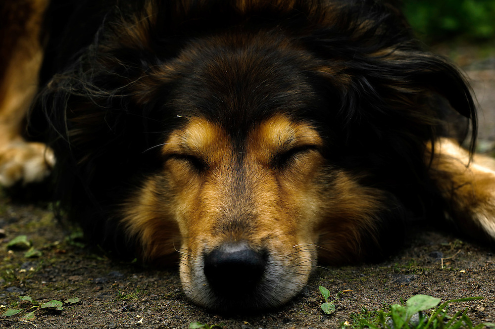 A sleeping dog.