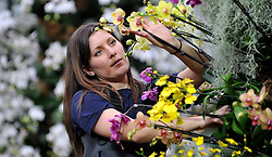 © Licensed to London News Pictures. 02/04/14 About 125 jobs could be cut as the Royal Botanic Gardens in Kew, west London, faces a £5m shortfall in revenue in the coming financial year. FILE PICTURE DATED  03.02.2011. Tsuyeko Western adds the final orchids to a display in the tropical glasshouse at Kew Gardens today (Thur). The launch of Kew Garden's Tropical Extravaganza. This theme celebrates the fact that 2011 has been designated the Year of the Forest by the UN. It is attempting to celebrate the rainforests' beauty as well as highlight the dangers that they are facing. The display includes varieties of Orchids, Anthuriums, Tillandsias and Aechmeas. Picture Credit should read Stephen Simpson/LNP