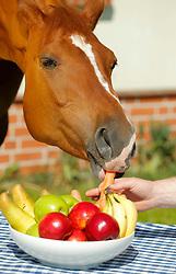 Futter<br /> Vitamine fürs Pferd<br /> © www.sportfotos-lafrentz.de/Stefan Lafrentz