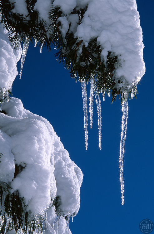 &quot;Icicles 3&quot;- Photographed near Alder Creek in the Tahoe Donner area of Truckee, CA.<br /> Photographed: November, 2003
